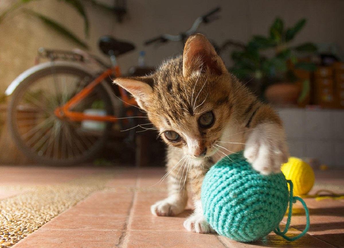 gattino gioca con gomitolo
