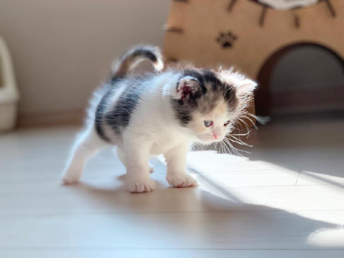 cucciolo di gatto molto piccolo