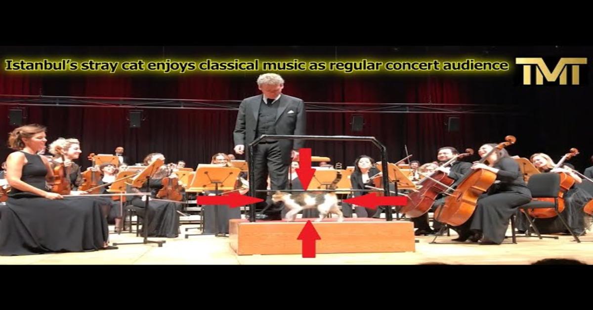 orchestra suona con gatto sul palco