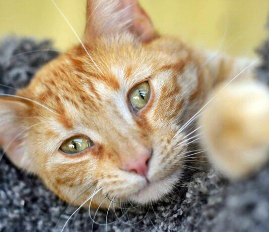 pupille del gatto malato