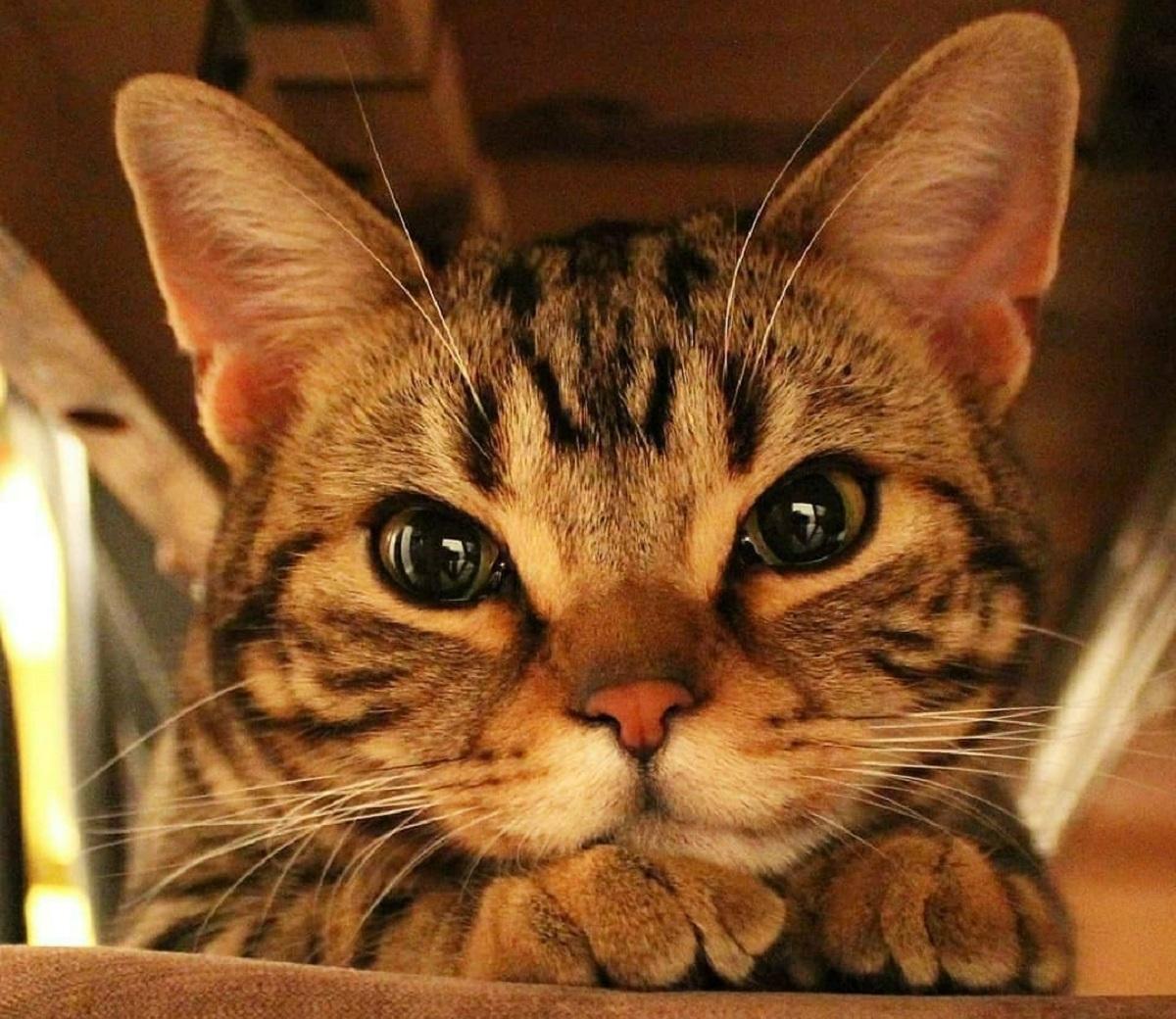 gattini sanno molto nostro comportamento
