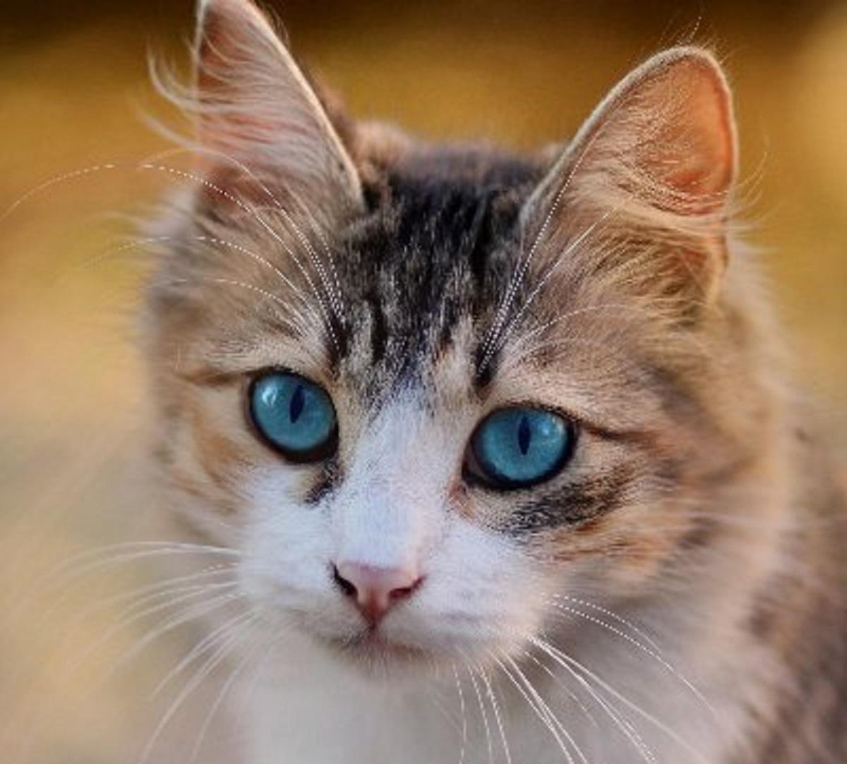 gatti conoscono noi e cosa facciamo