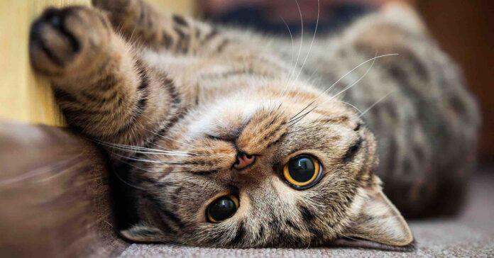 svelato cosa il tuo gatto sapere di te