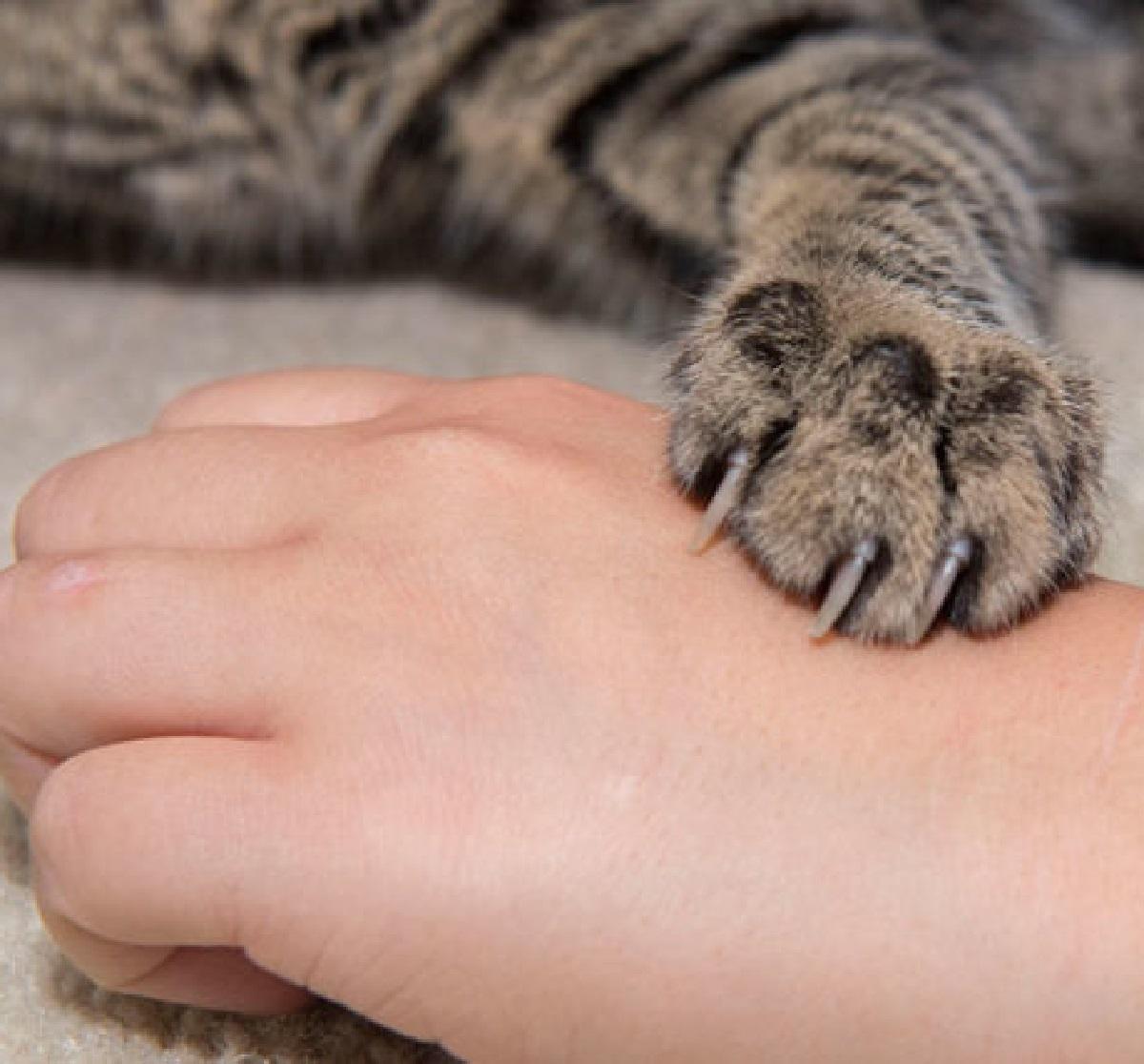 gattini utilizzo zampe modo