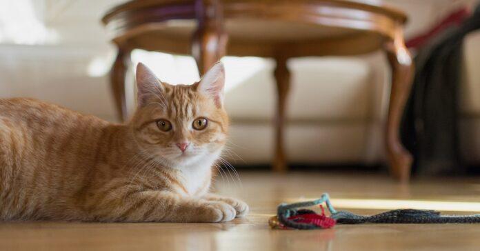 gattini vedere padroni