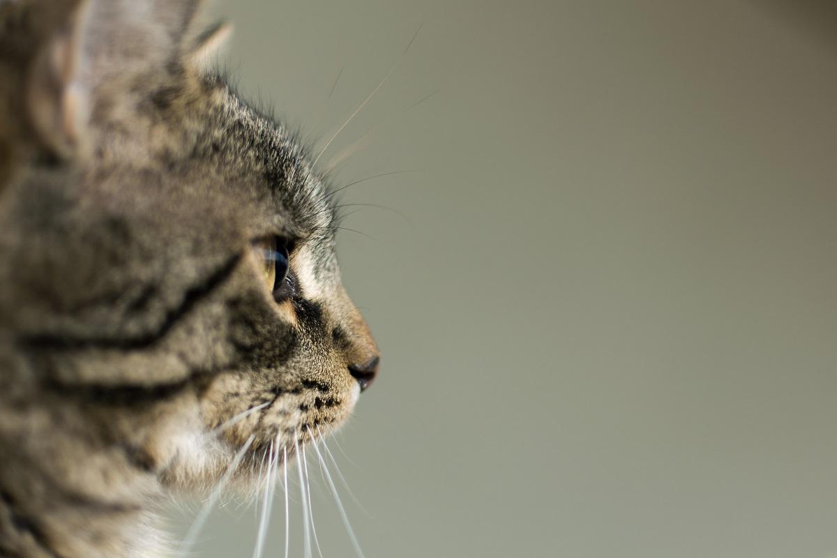 gatto osserva foto