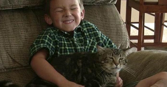 Tara gattina con padrone