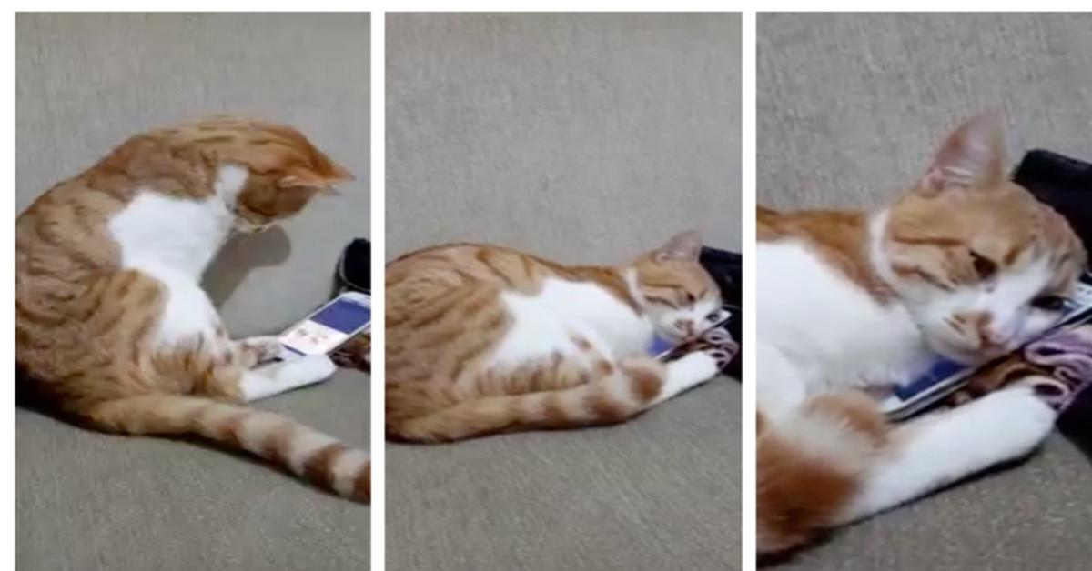 gatto triste vedendo video padrone morto