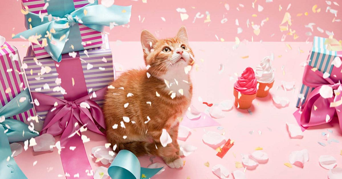 festeggiare il compleanno del gatto