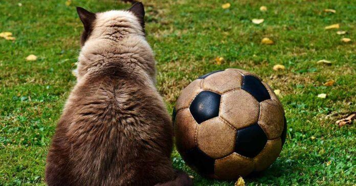 trainer gatto adulto