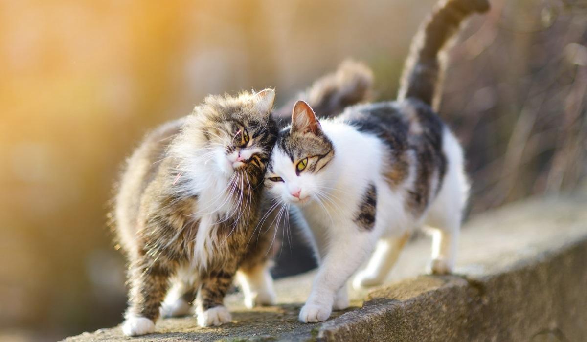 gatti fanno le fusa