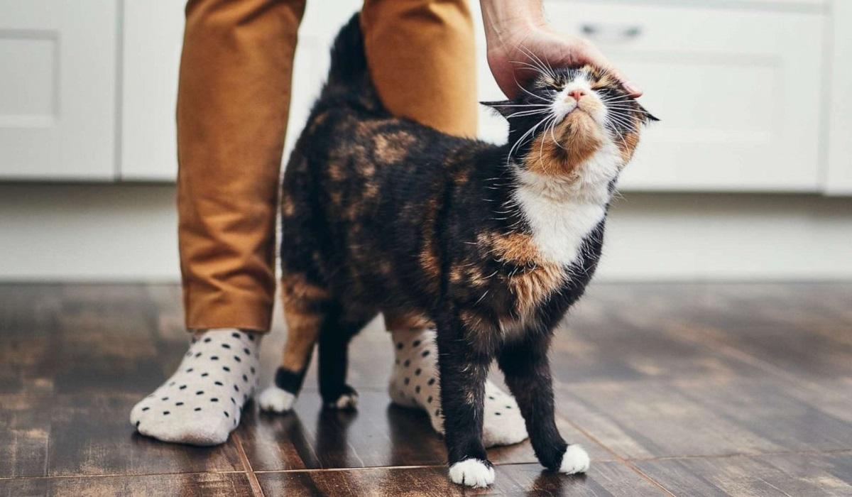 gatto fa le fusa al suo padrone