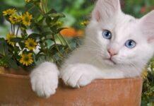 gattino vaso seduto