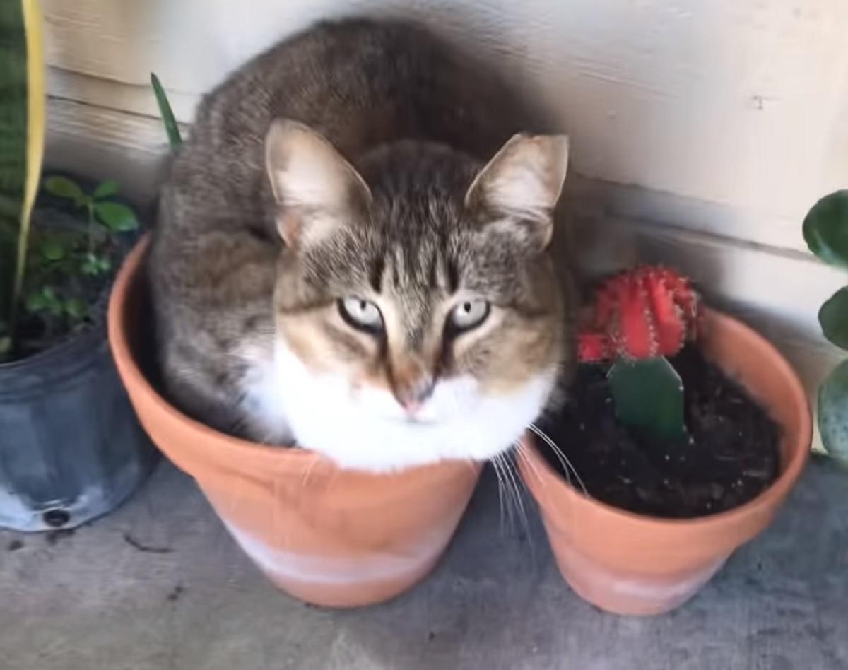 micio nasconde pianta