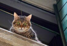 gattino caduta rischio