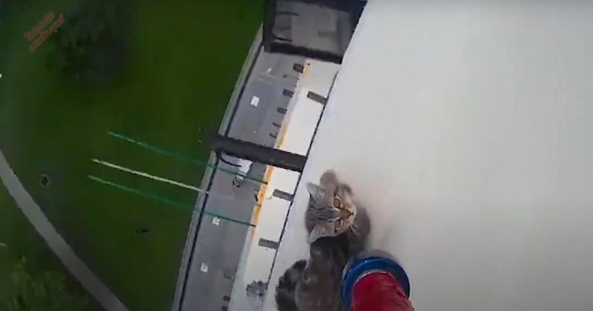 gattino cornicione pericolo
