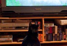 gattino sportivo tv