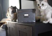 coppia di gattini reagisce strani rumori provenienti scatola misteriosa