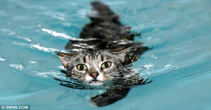 mog nuota