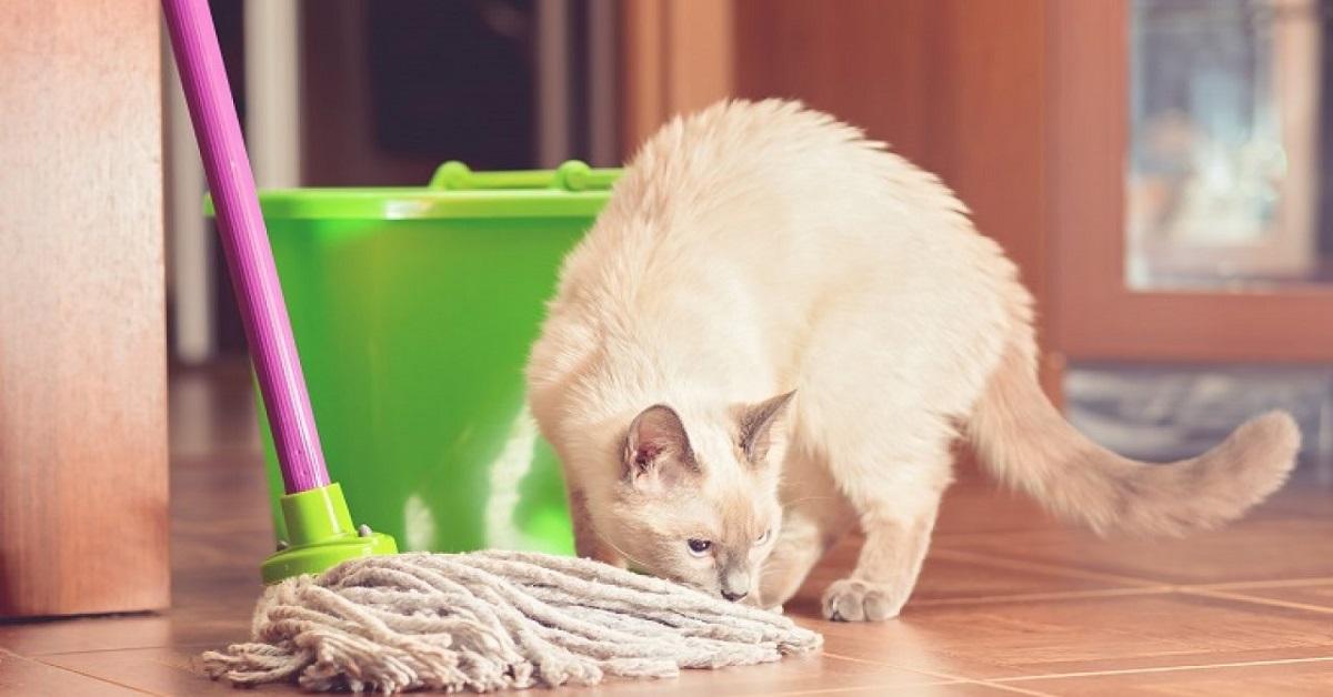 pulire casa con gatto