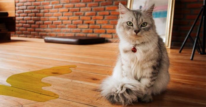 pipì del gatto fuori dalla lettiera