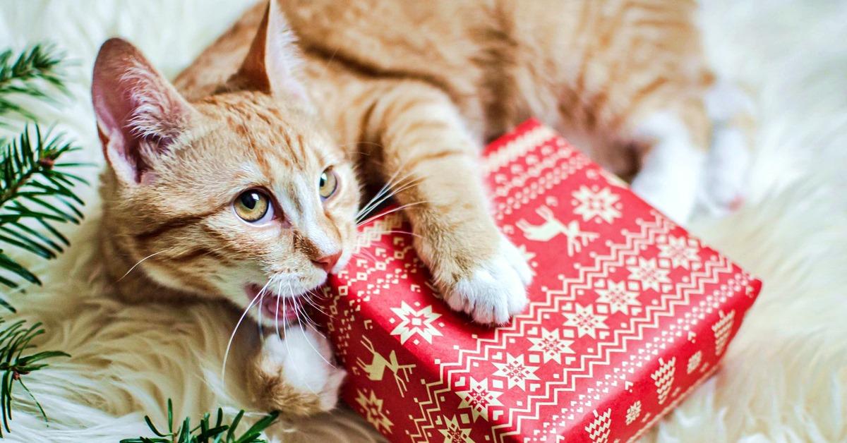 gatto che rosicchia un pacco regalo