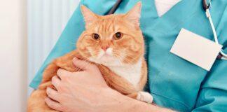 veterinario tiene in braccio un gatto