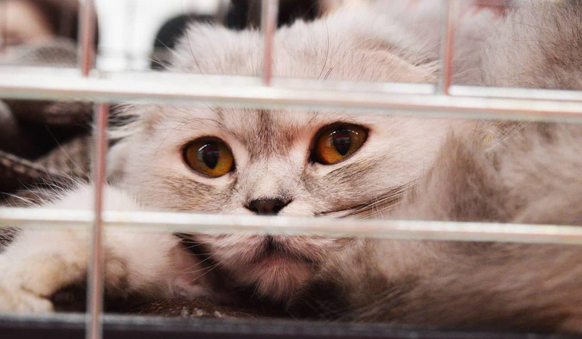 gatto dentro il trasportino