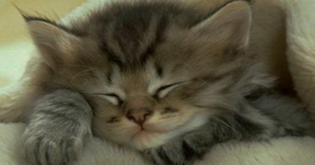 Attenzione al gatto, quando dorme qui sopra ecco quali pericoli potrebbe correre 2