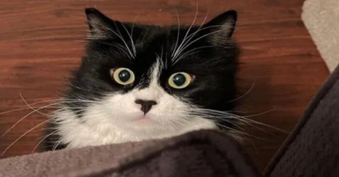 Buddy gattino video