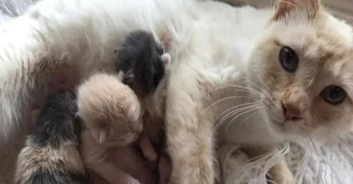 Charlotte gattina cuccioli video