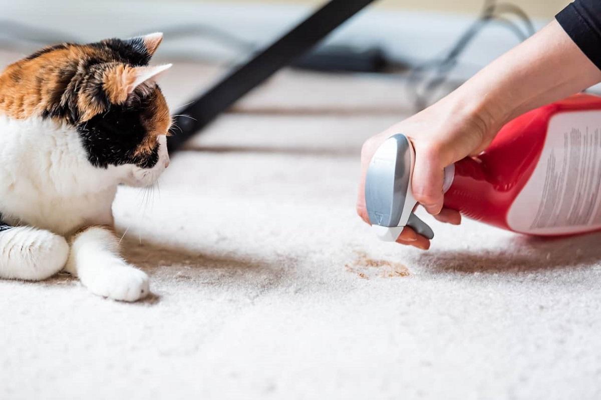 pulire pipì del gatto