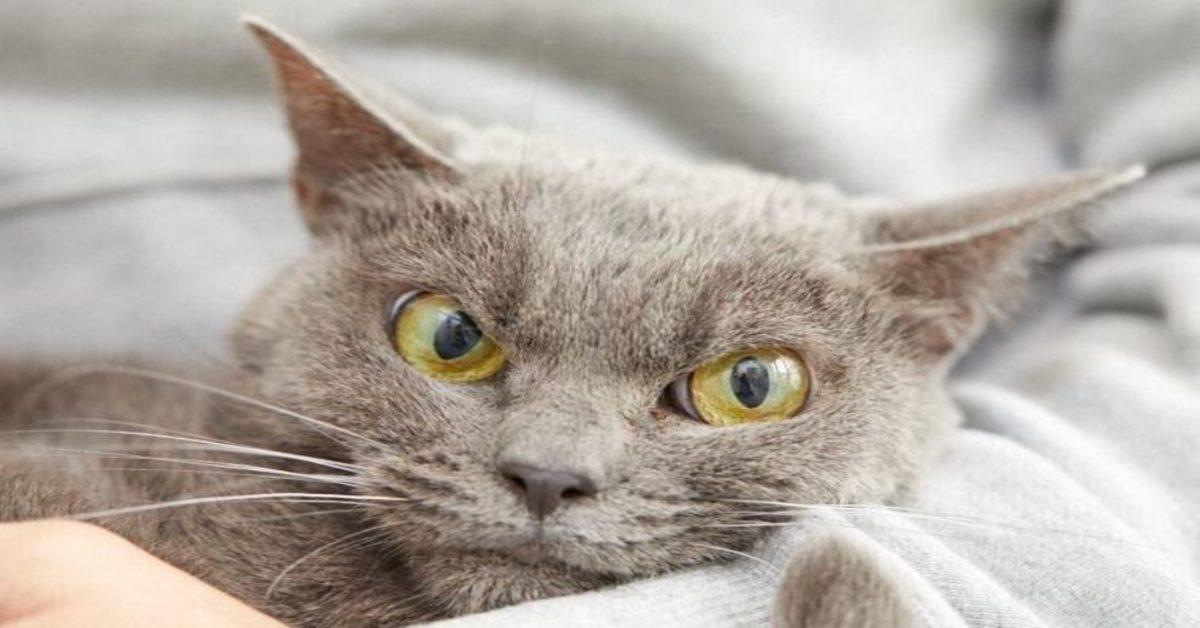 Ecco cosa dovresti fare se il tuo gatto si comporta sempre male e sembra non pentirsene