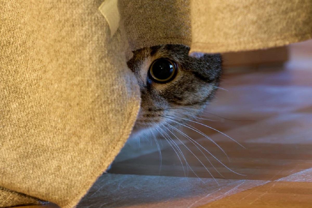 gatto nascosto sotto il letto