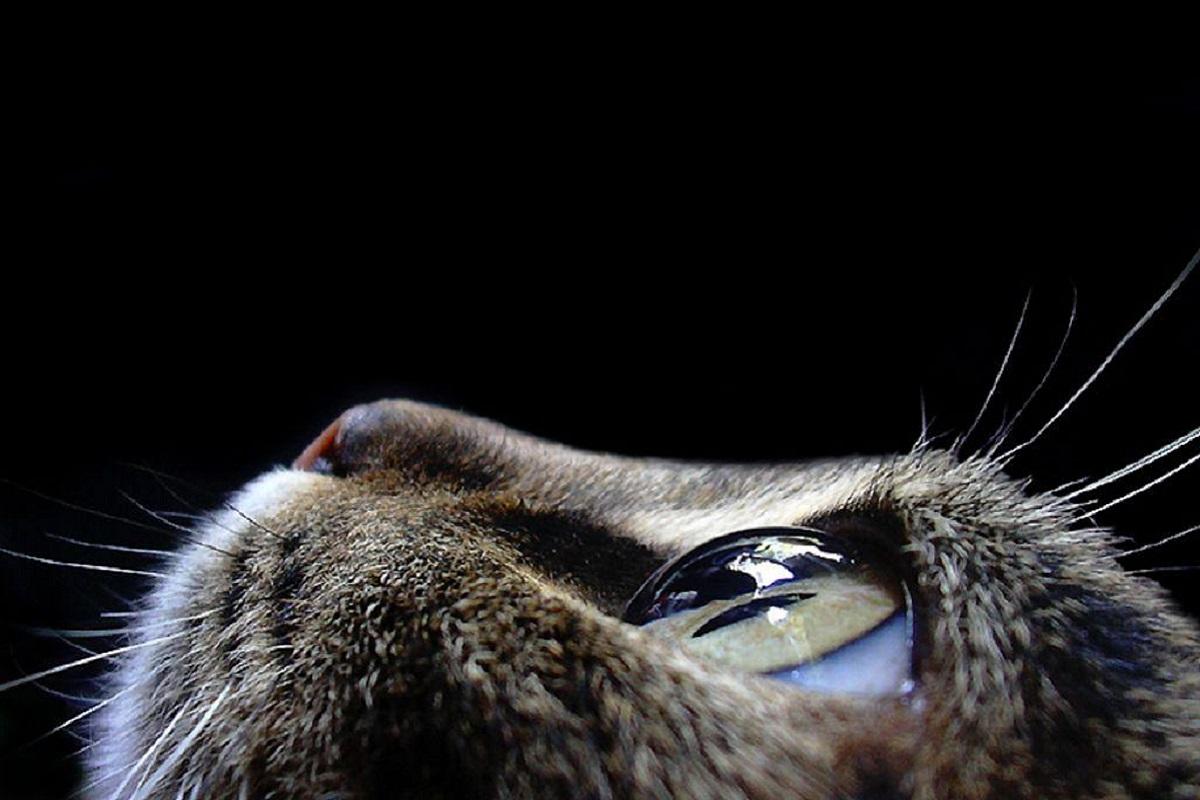occhio del gatto