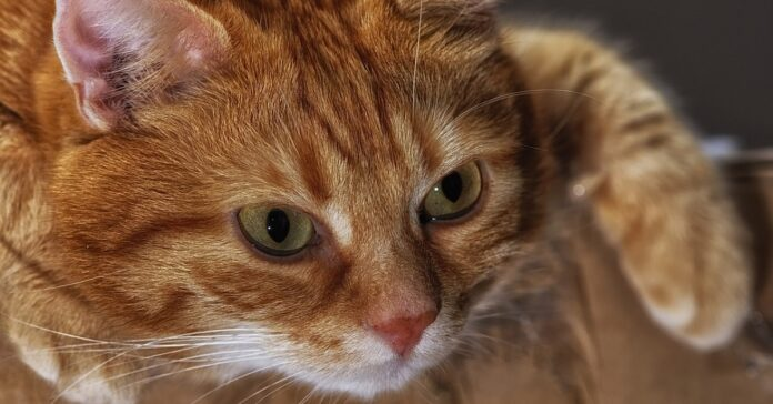 Gattino ansioso che salva il proprietario dalla vasca