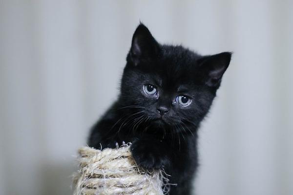 gatto che inizia a giocare