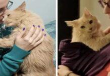 Huggs gattino video