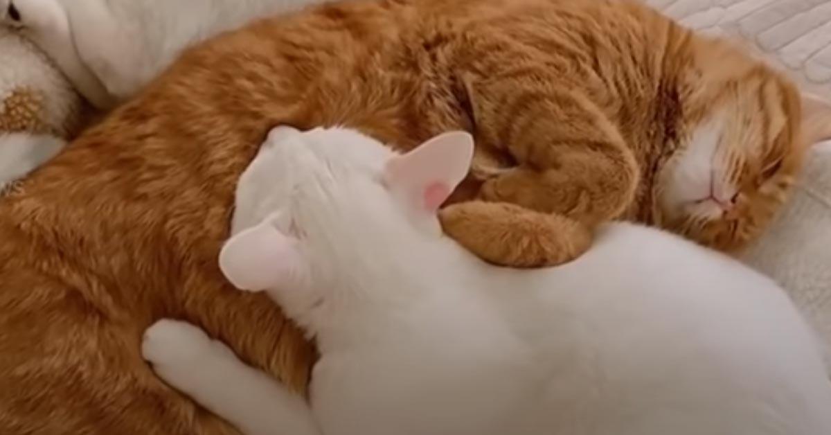 Gatti con una bambina