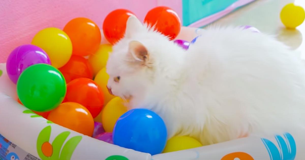 Gatto che gioca con delle palline