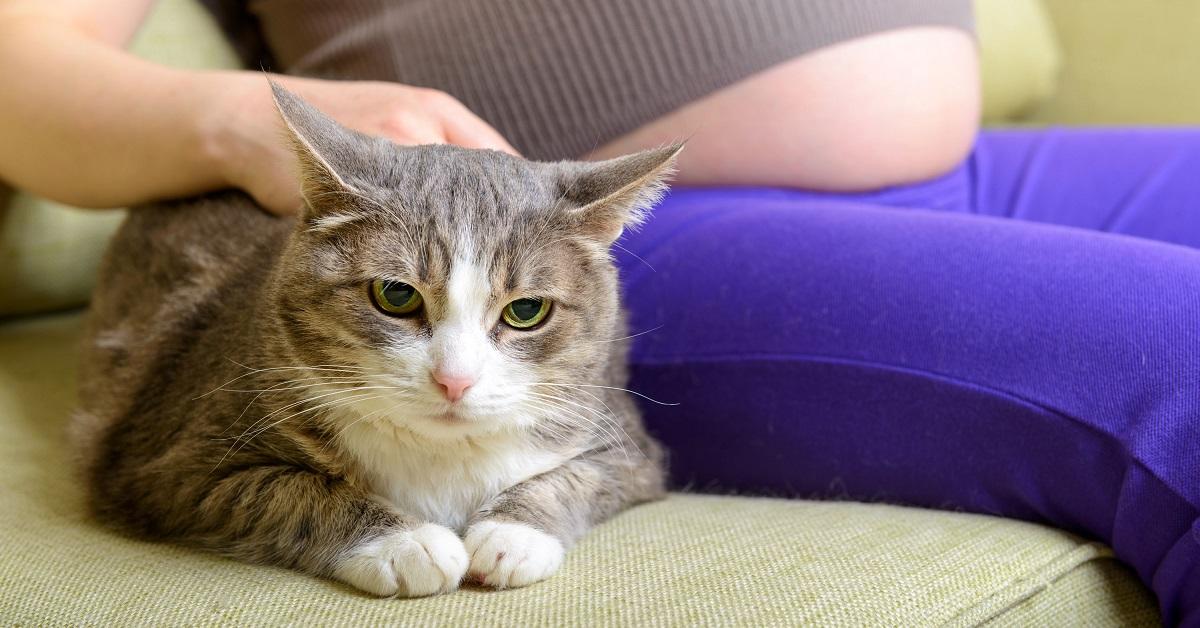 gatto e ragazza in gravidanza