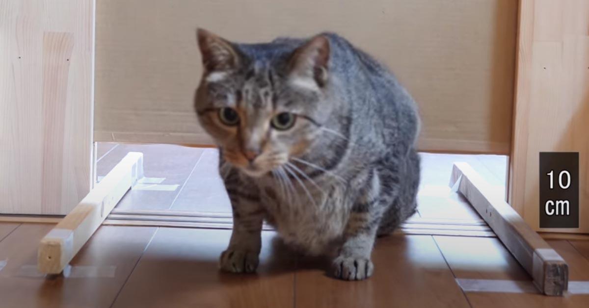 Gatto che passa sotto ad una porta