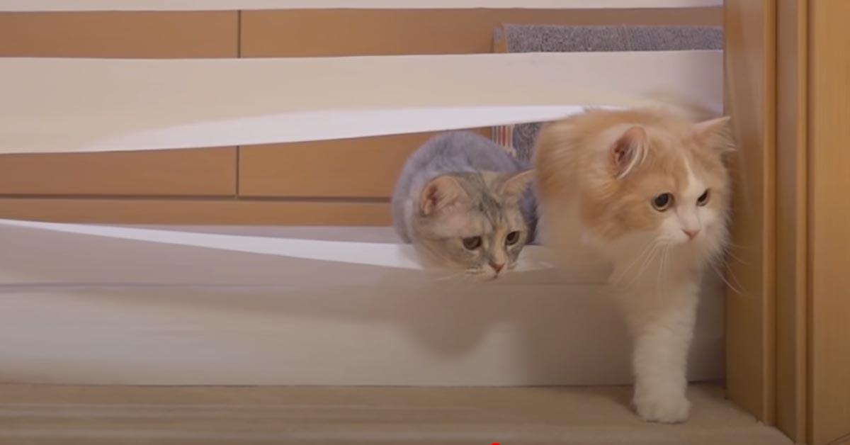 Gatti con un muro di carta igienica
