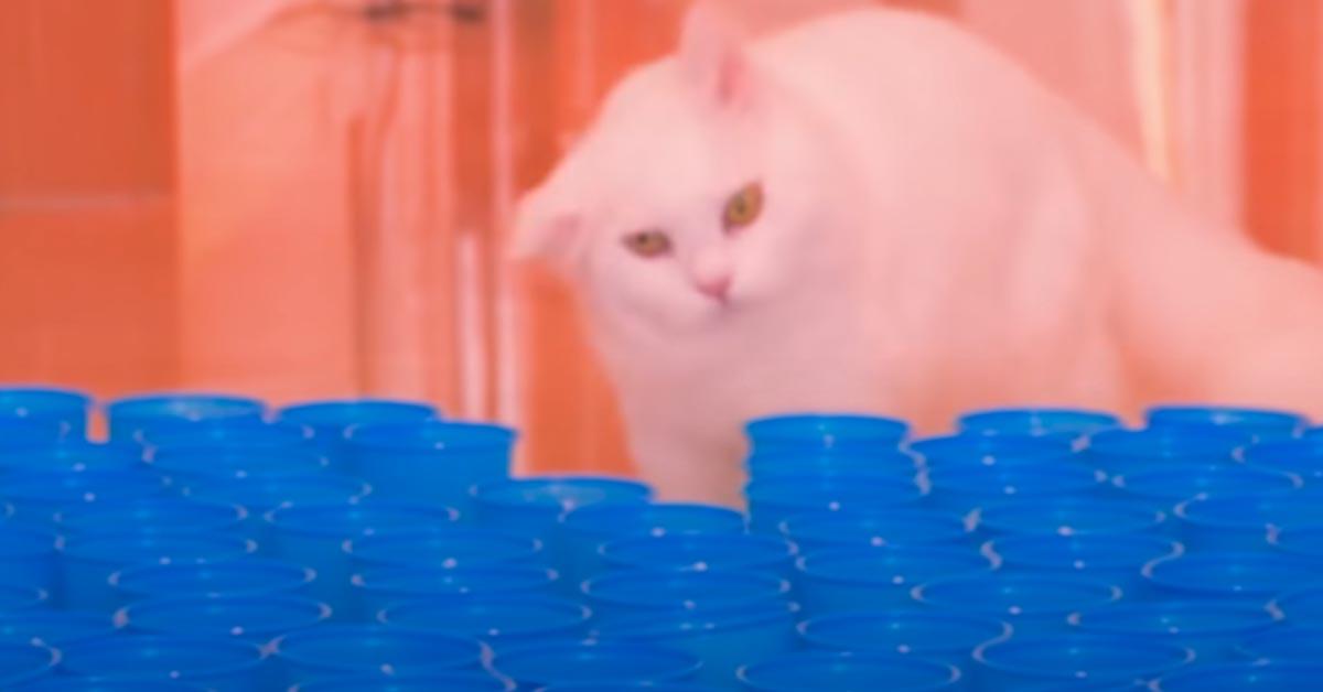 Gatto con dei bicchieri