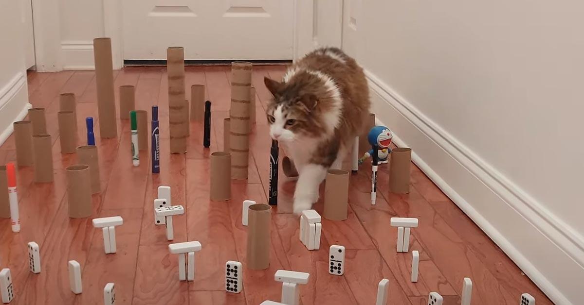 Gatto affronta percorso ad ostacoli