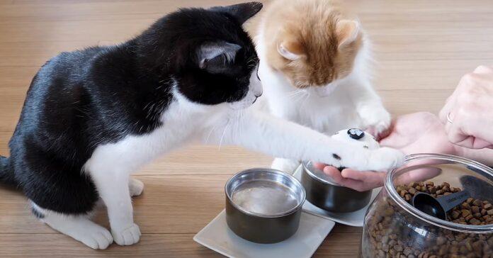 Gatti che suonano un campanello