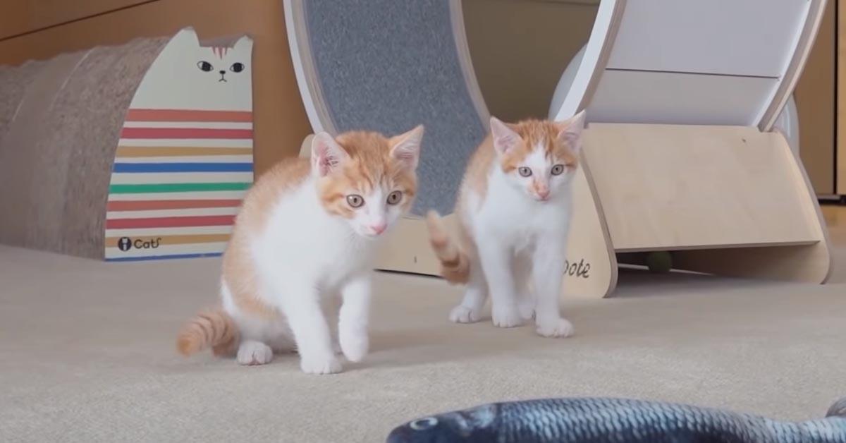 Gatti che giocano con un peluche