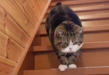 Gatto scende le scale