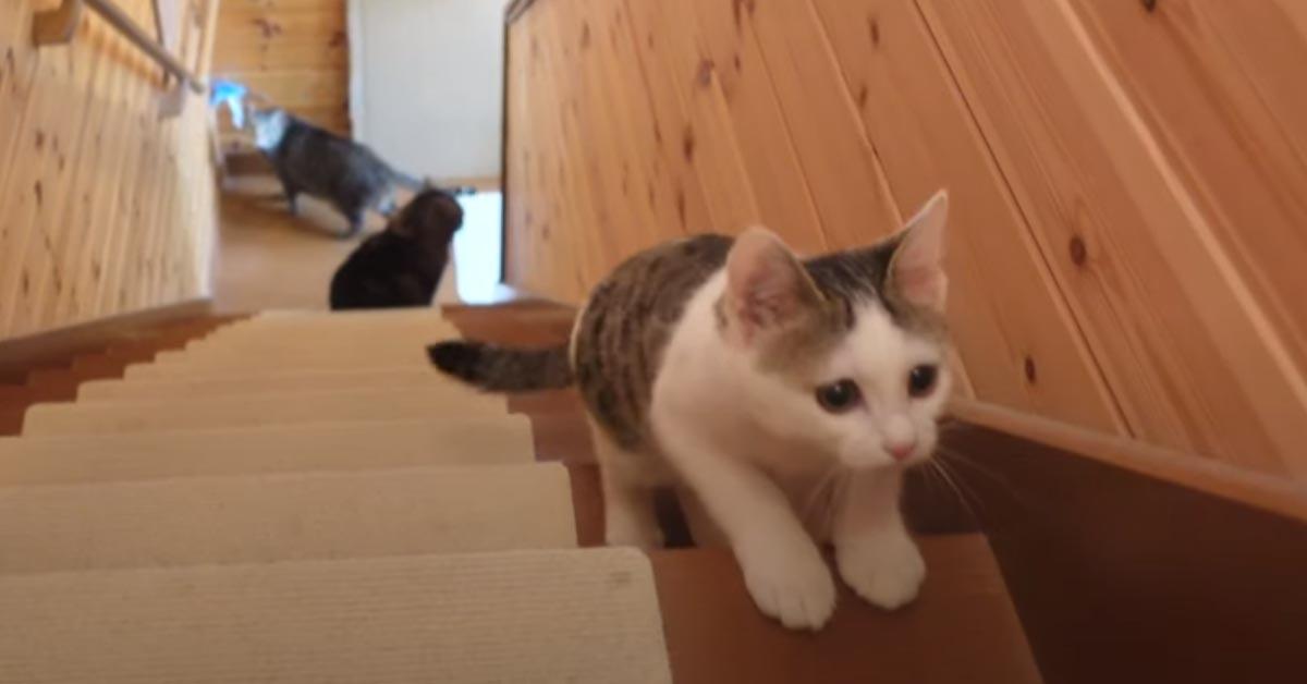 Gatto sale le scale