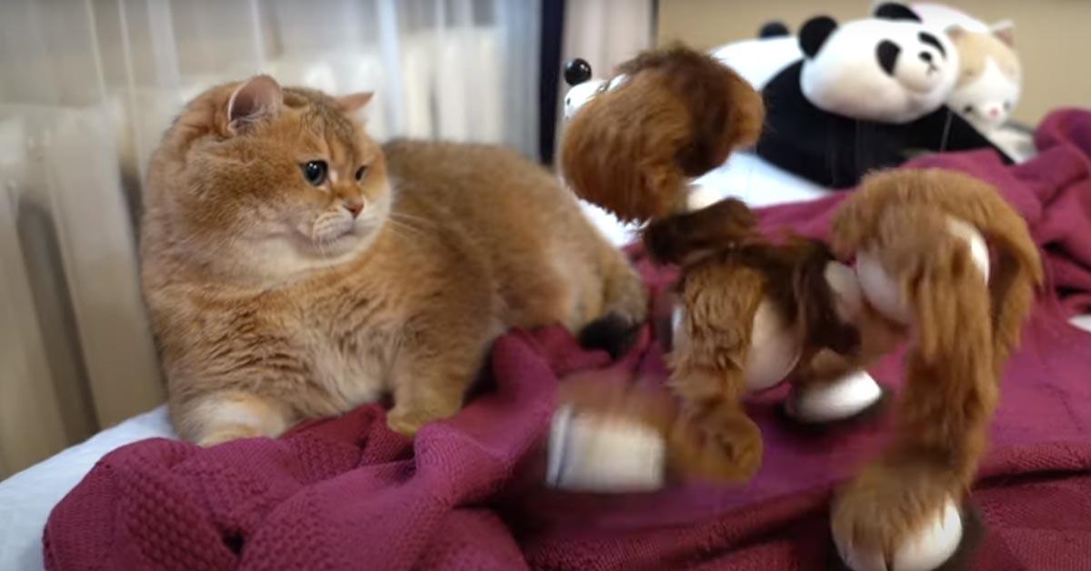 Gatto che gioca con un peluche